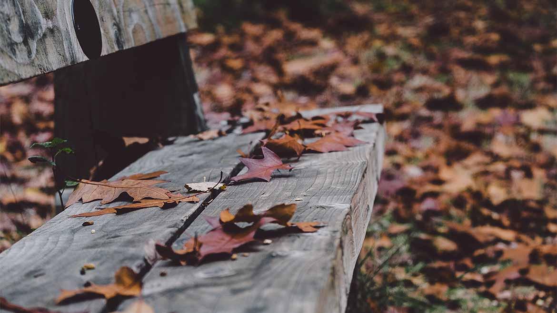 Outono-1170x658