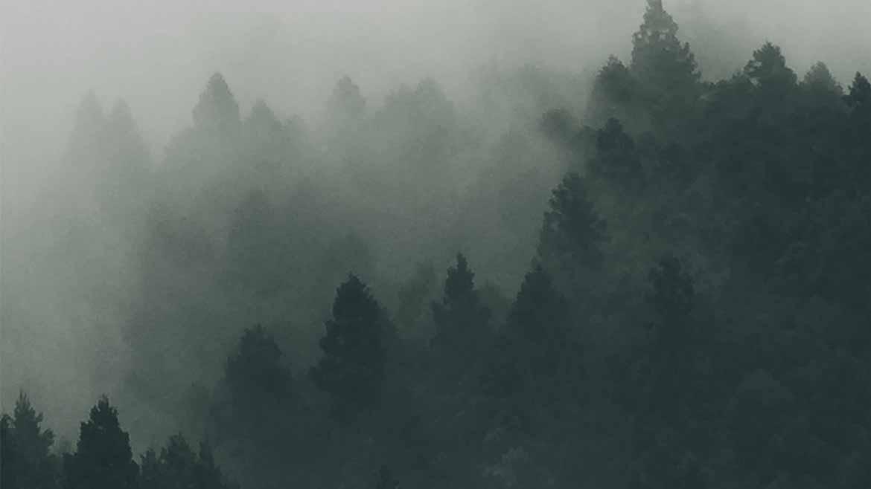 floresta-1170x658