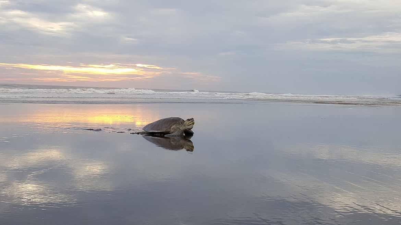 turtle-1170x658