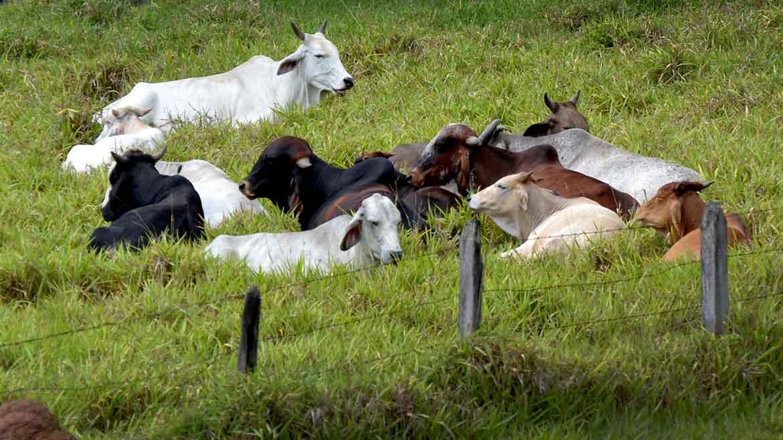 Vacas-1170x658