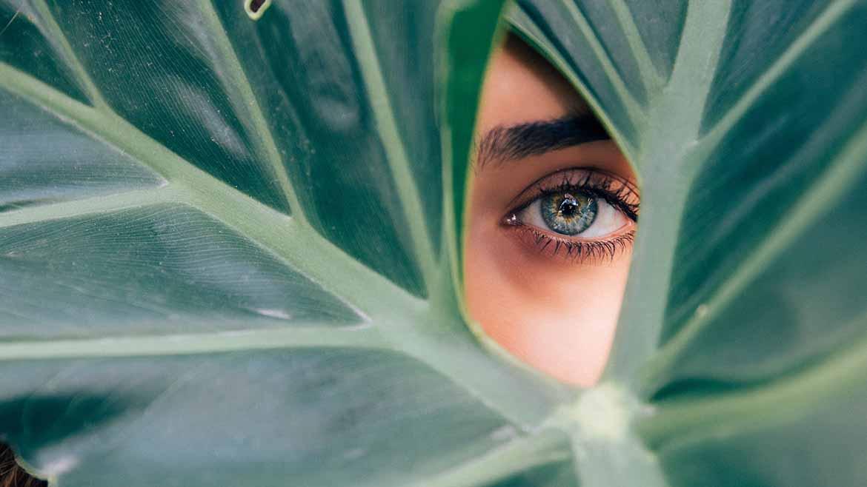 eye-foliage-1170x658