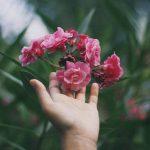 O que aprendi com as plantas
