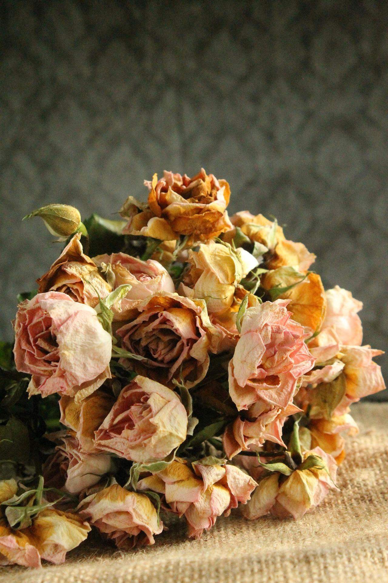 flower-1225807_1920